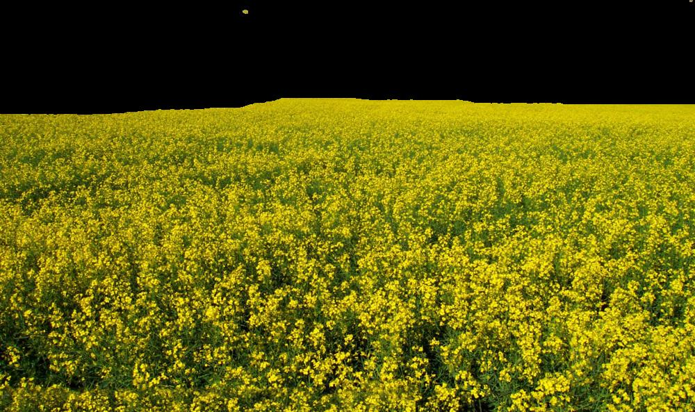 Psd official psds share. Flower field png
