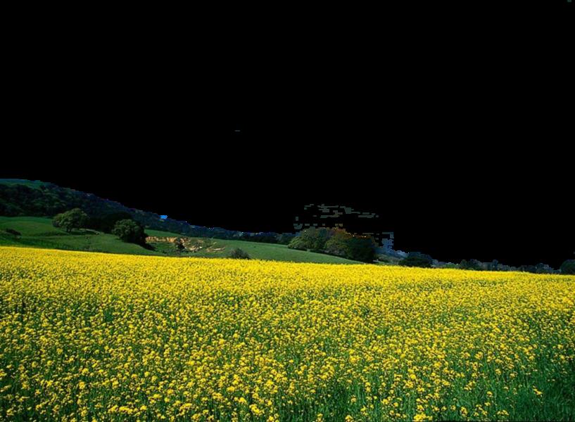Flower field png. Psd official psds share
