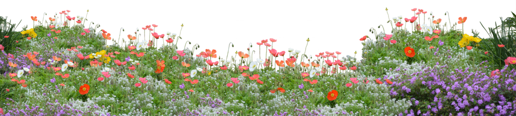 Flower garden png. Poppies by kibblywibbly on