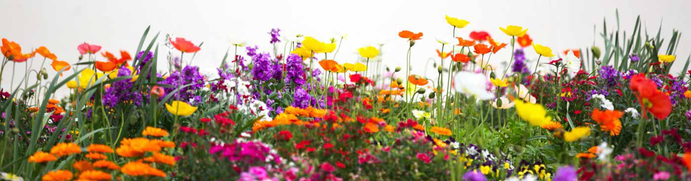 Flower garden png. Better earth gardens tropicals