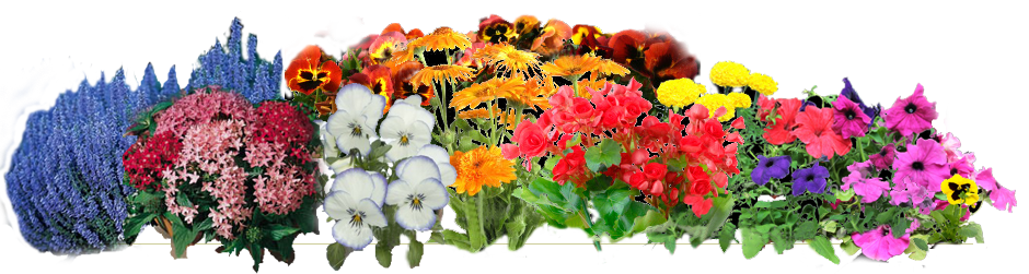 Index of catherinegreen cgreen. Flower garden png