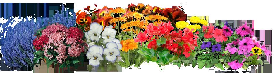 Index of catherinegreen cgreen. Flower garden png