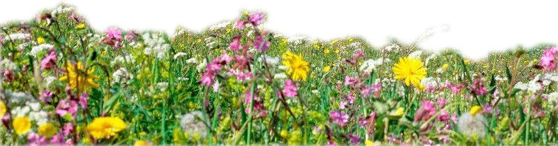 Forgetmenot plant flowers publicat. Flower garden png