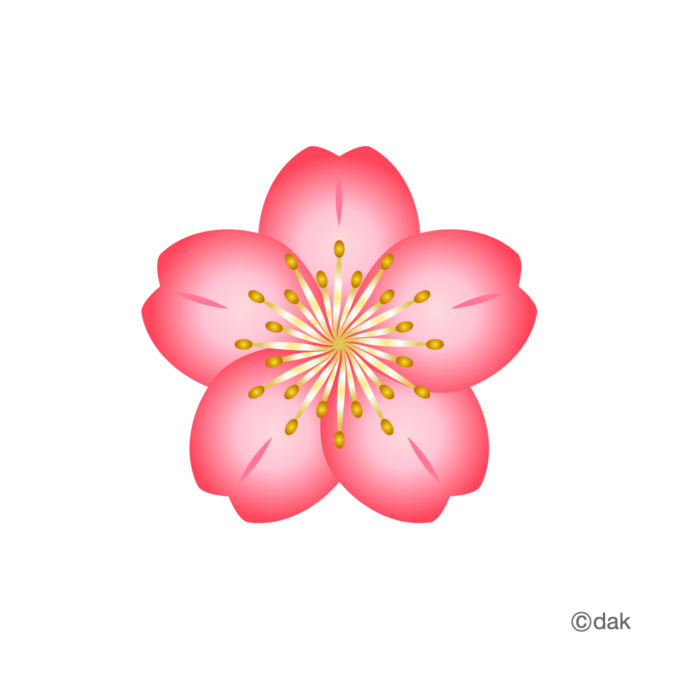 Free material cherry pictures. Flower graphic png