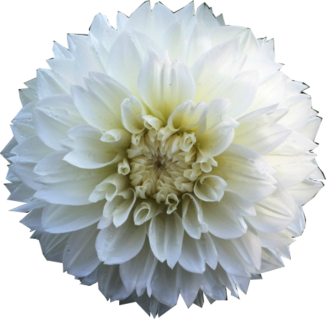 White art resources episode. Flower overlay png