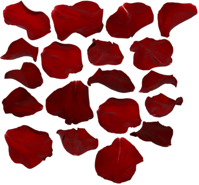 Rose petals by two. Flower petal png