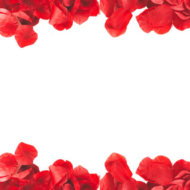 Flower petal png. Red petals transparent frame