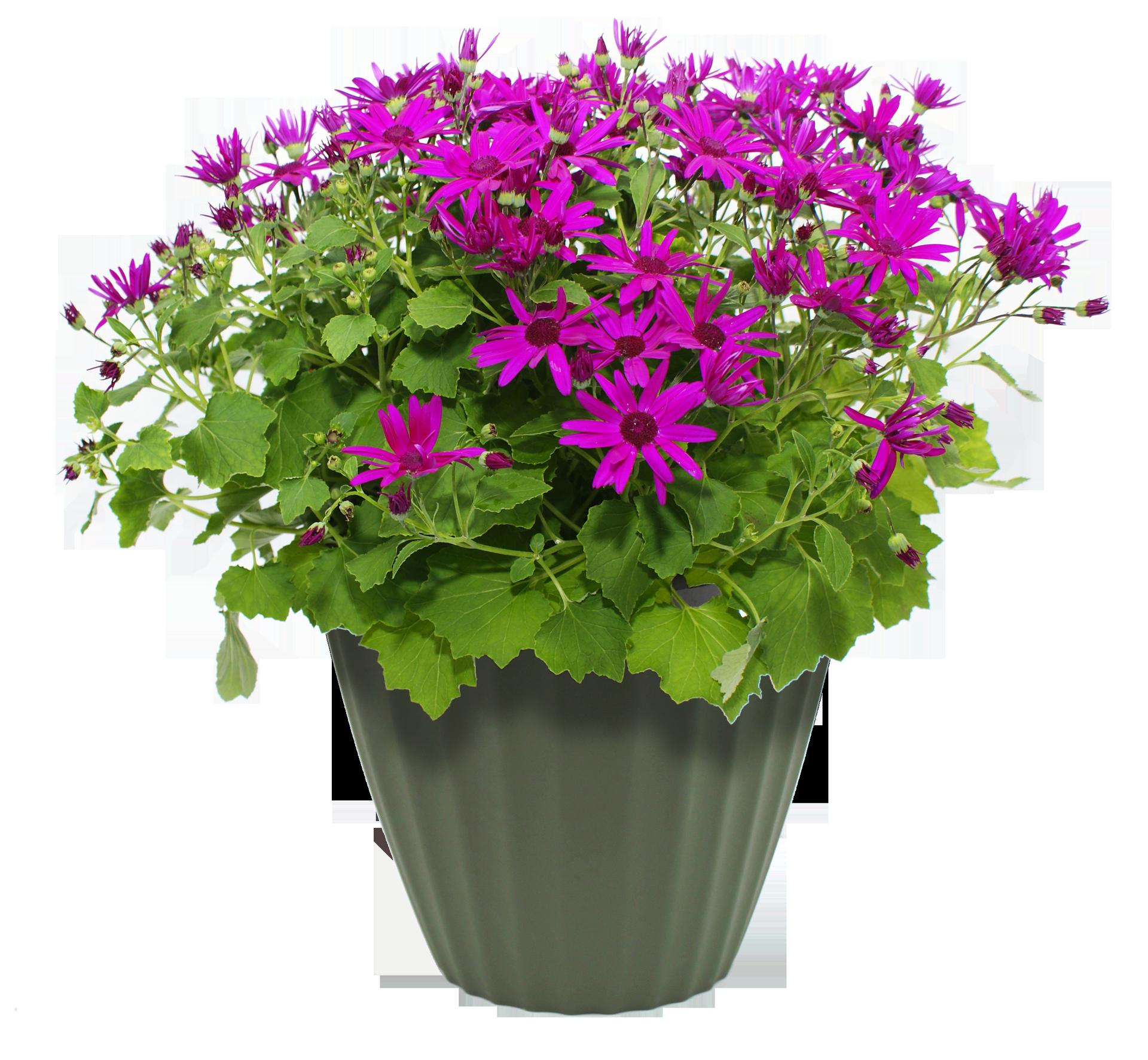 Pot transparent images pluspng. Flower plant png