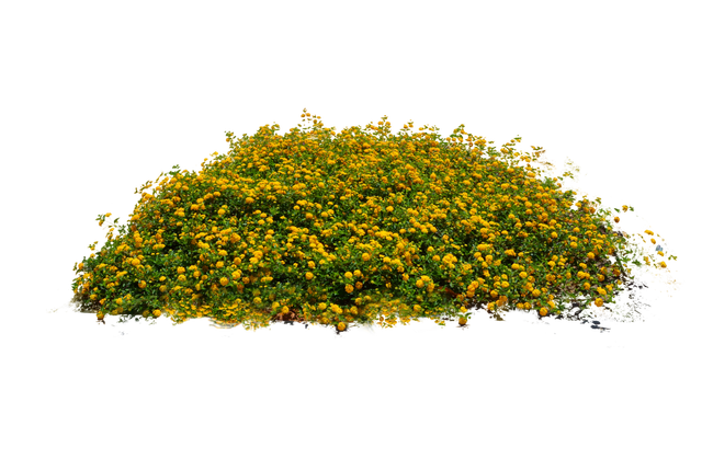 flowers images free. Flower plants png
