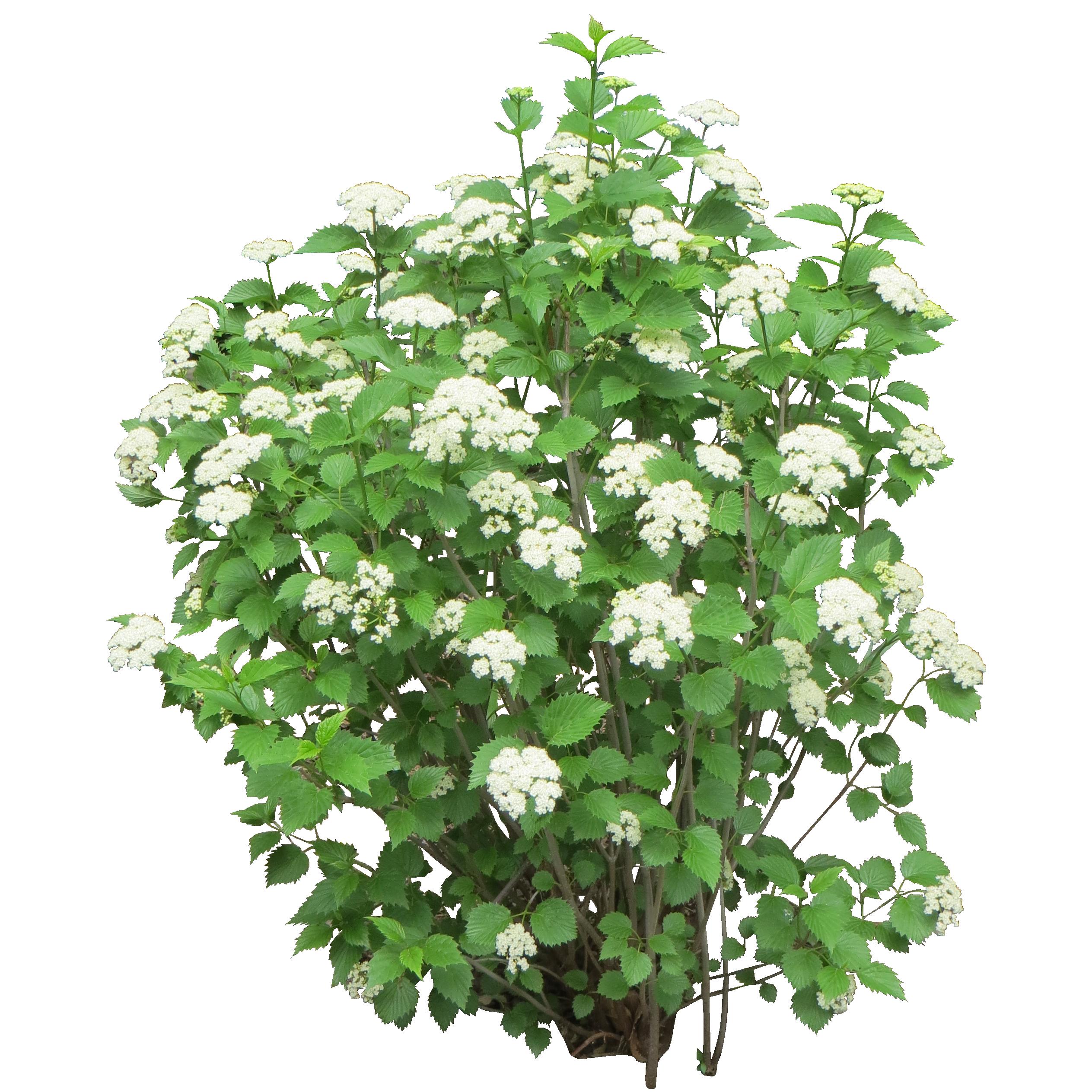 Bushes images free download. Flower plants png