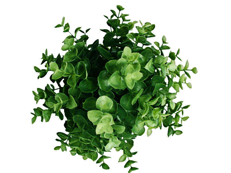Flower plants png. Plant top view image
