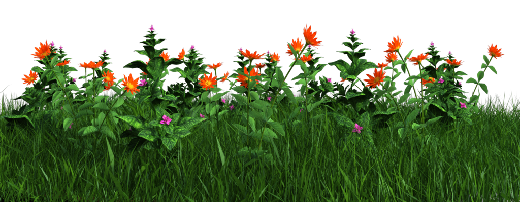 Free grass and flowers. Flower plants png