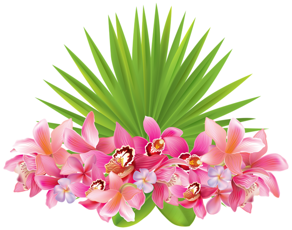 Flower png clipart. Tropical flowers image clip