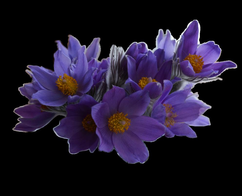 Spring flowers by vladlena. Flower png deviantart