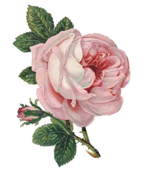 Flowers transparent for your. Tumblr flower png