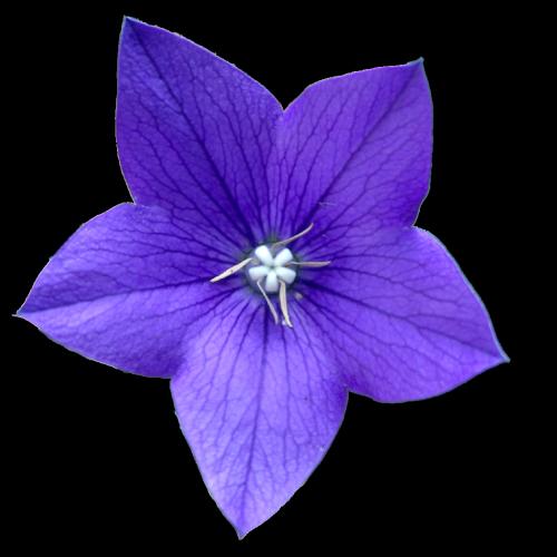 Flower png tumblr.