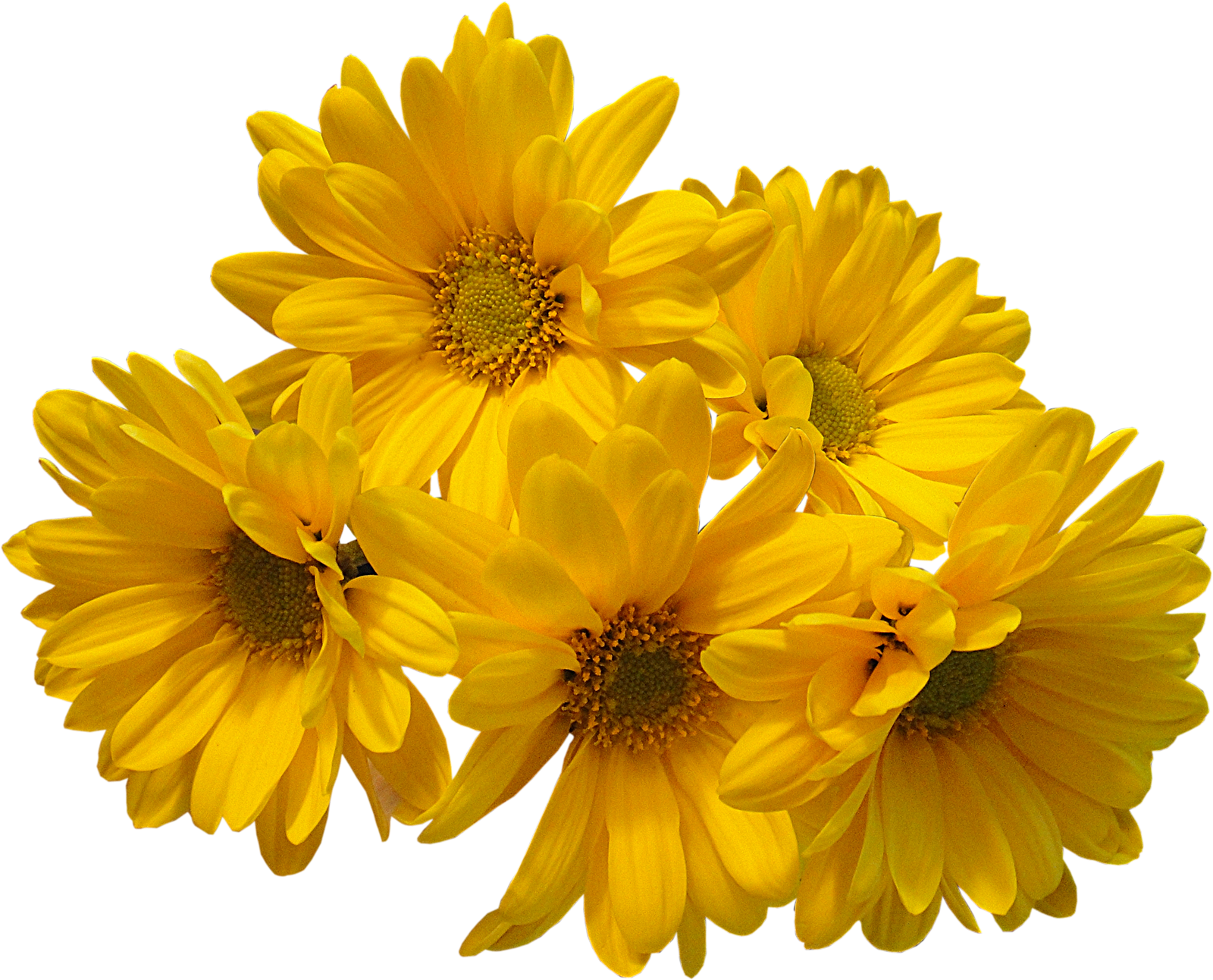 Download flowers bouquet transparent. Yellow flower png