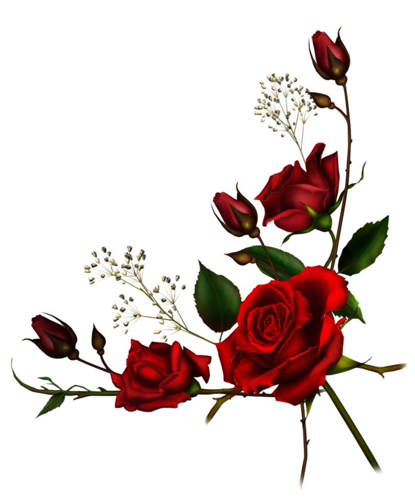 Rose red flowers rosesfreetoedit. Flower png tumblr