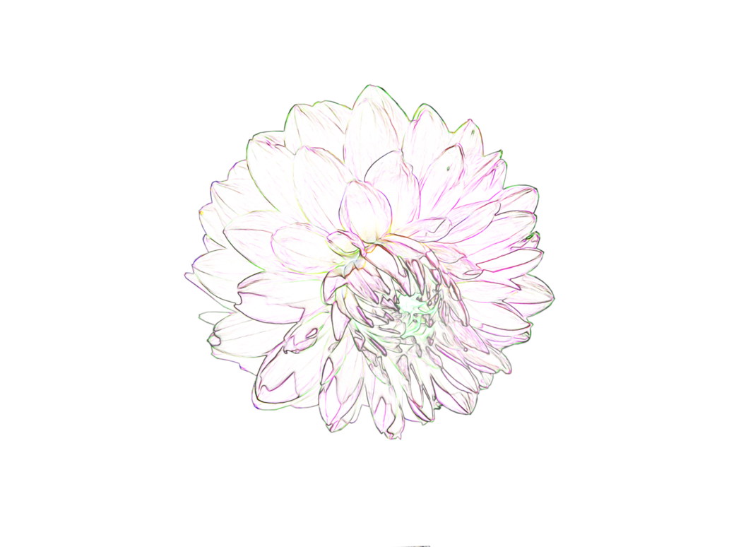 Flower Tumblr Png Flower Tumblr Png Transparent Free For Download