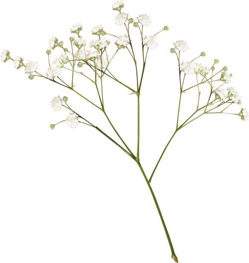Flowers . Flower png tumblr