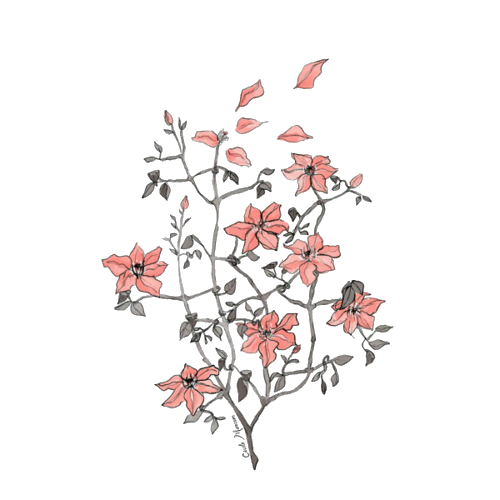 Flower drawing png tumblr. Pesquisa do google girl
