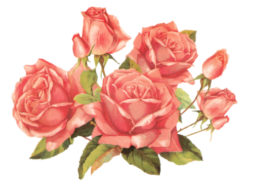Flower png tumblr.  roses for free