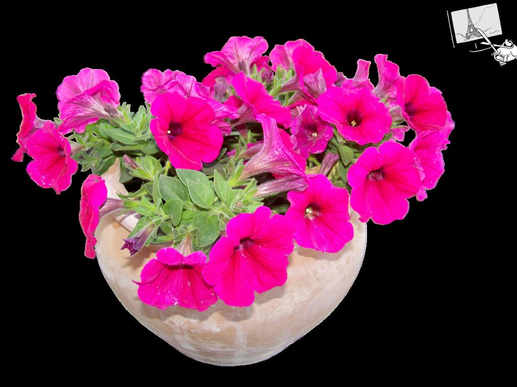 By jean on deviantart. Flower pot png