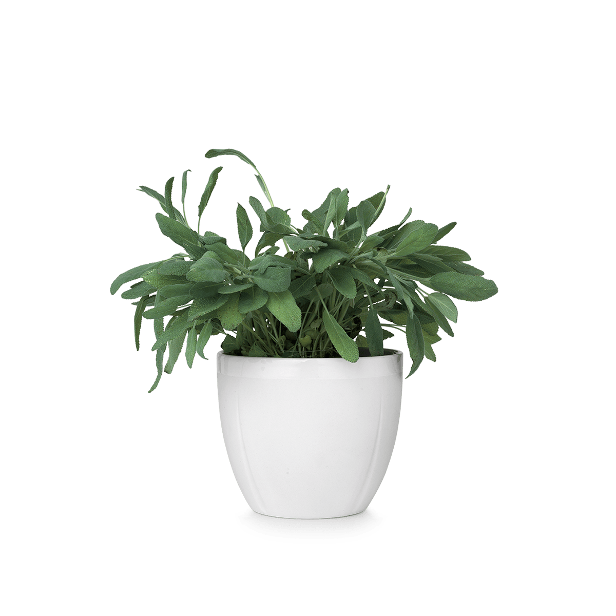 for free download. Flower pot png
