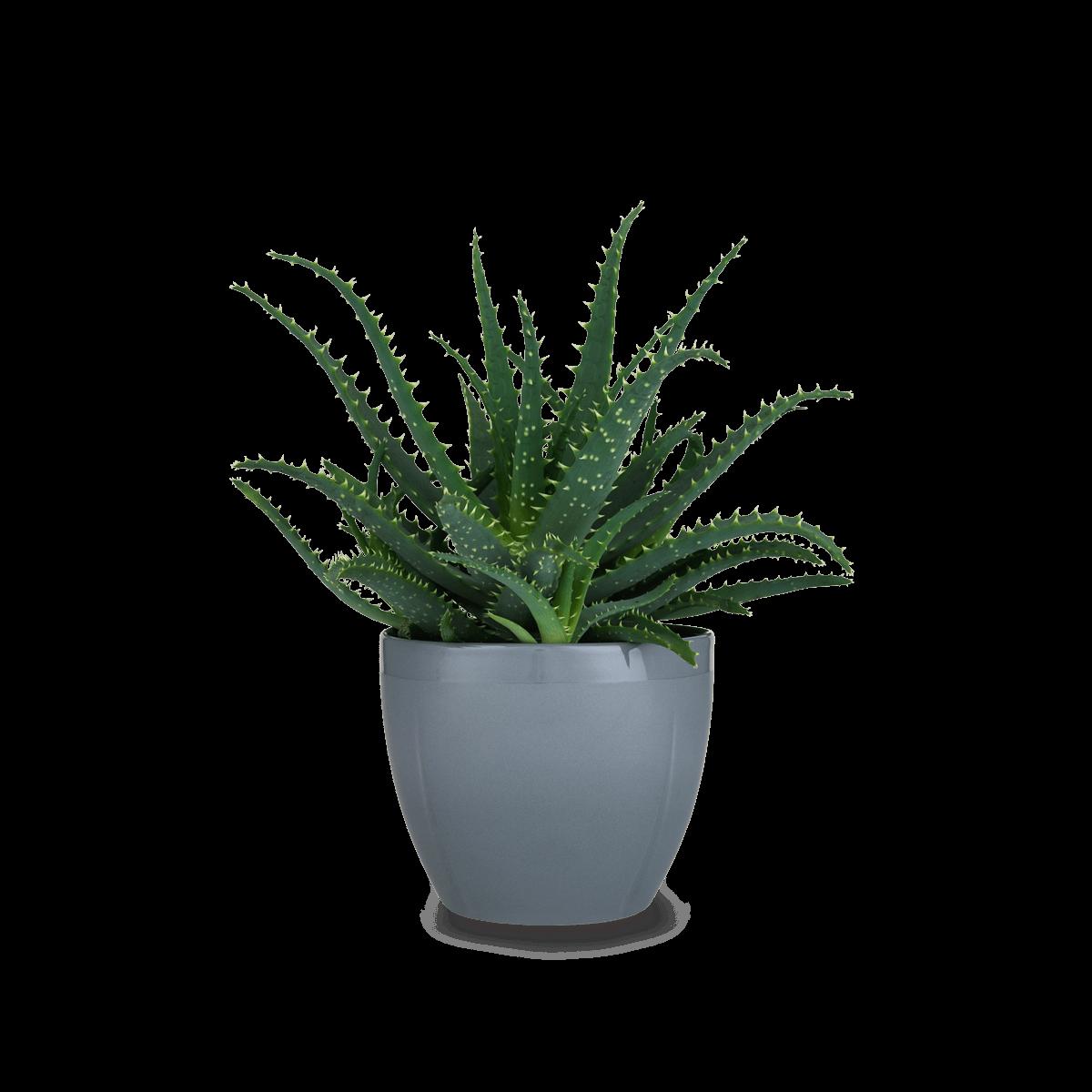Grand cru flowerpot gcflowerpotoecoldgreygrandcru. Flower pot png