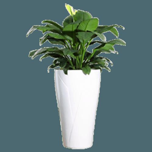 Premium fiber glass planter. Flower pot png
