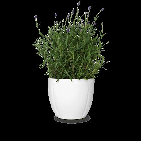Flowerpot grand cru. Flower pot png