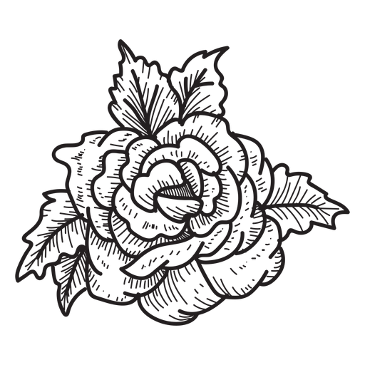 Flower sketch png. Blooming rose head icon