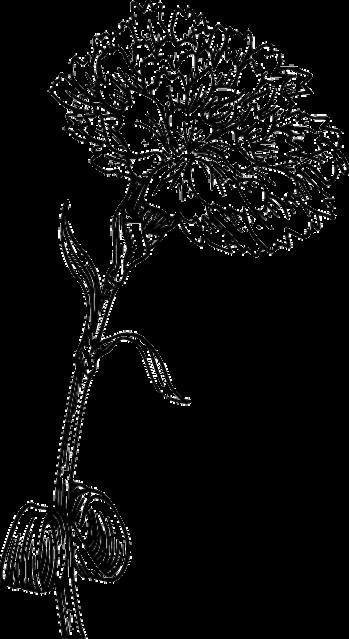 Flower Sketch Png Flower Sketch Png Transparent Free For Download On Webstockreview 2020