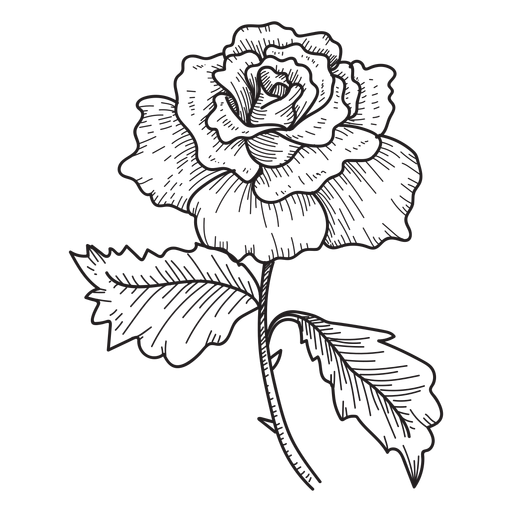 Flower sketch png, Flower sketch png Transparent FREE for download ...