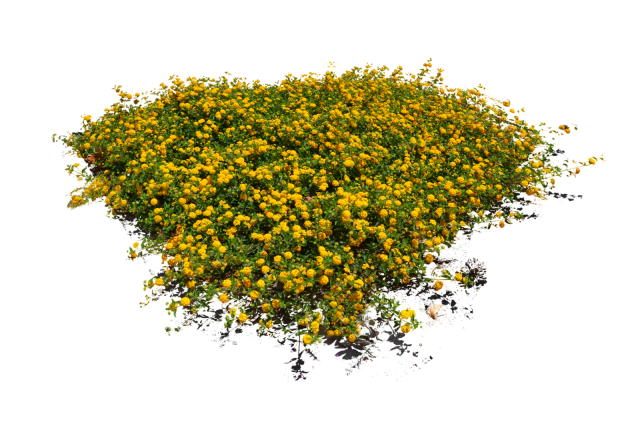 free plants flowers. Flower texture png