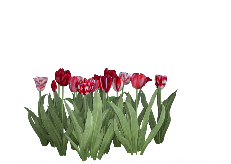 Flower texture png. Expansion sets for lisa