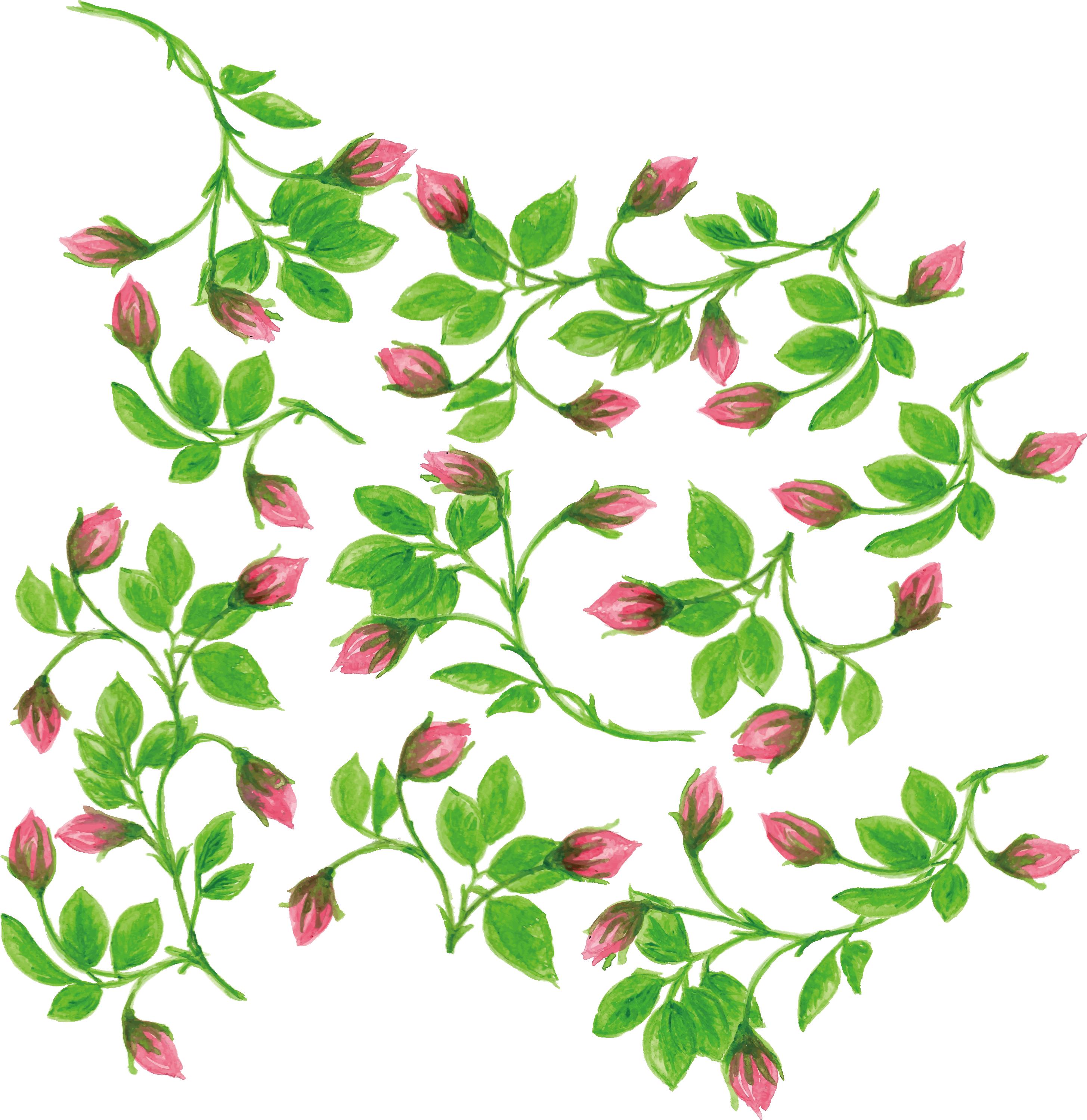 Flower vine png. Watercolor painting water color