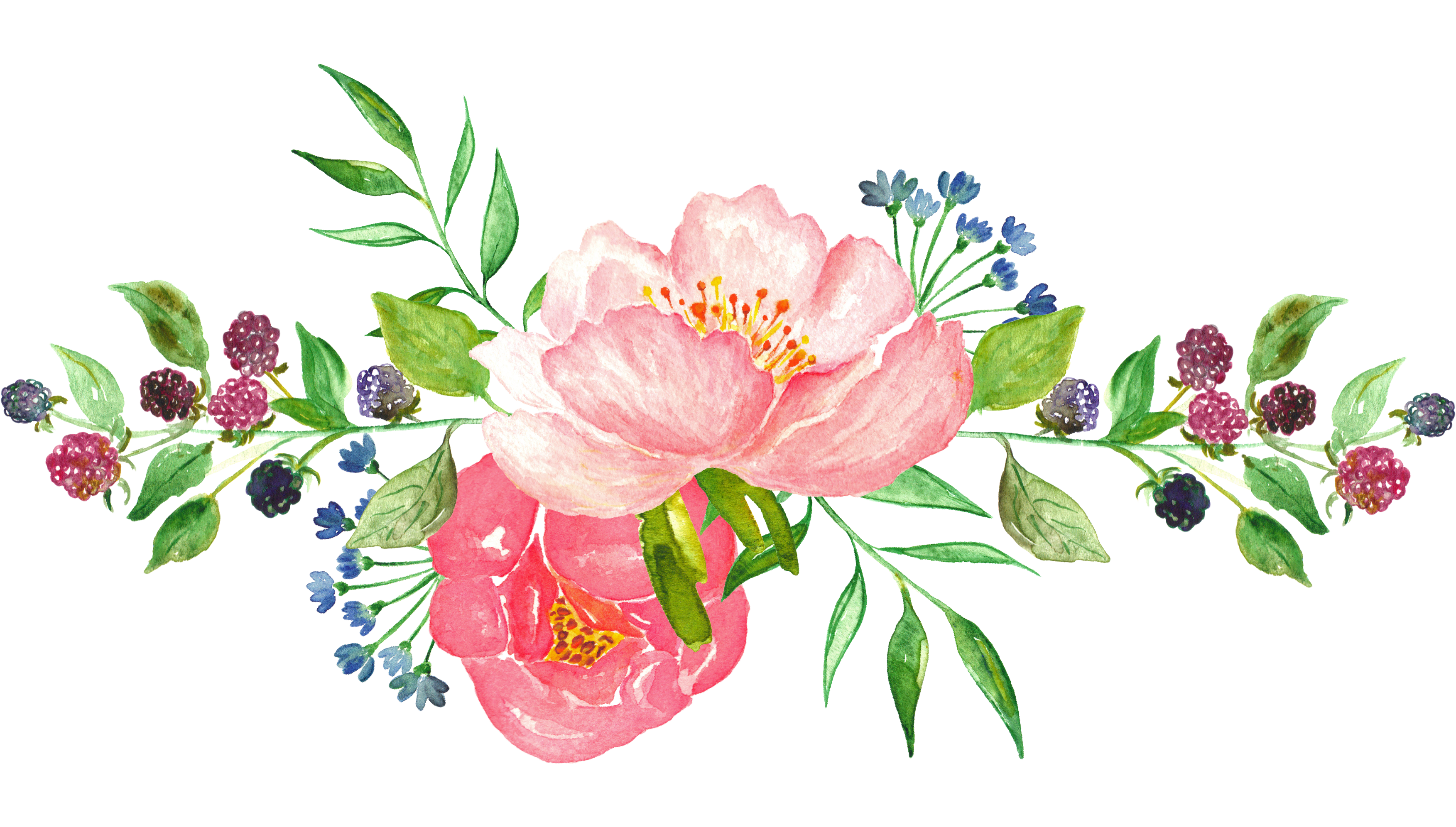 Flower watercolor png.  for free download