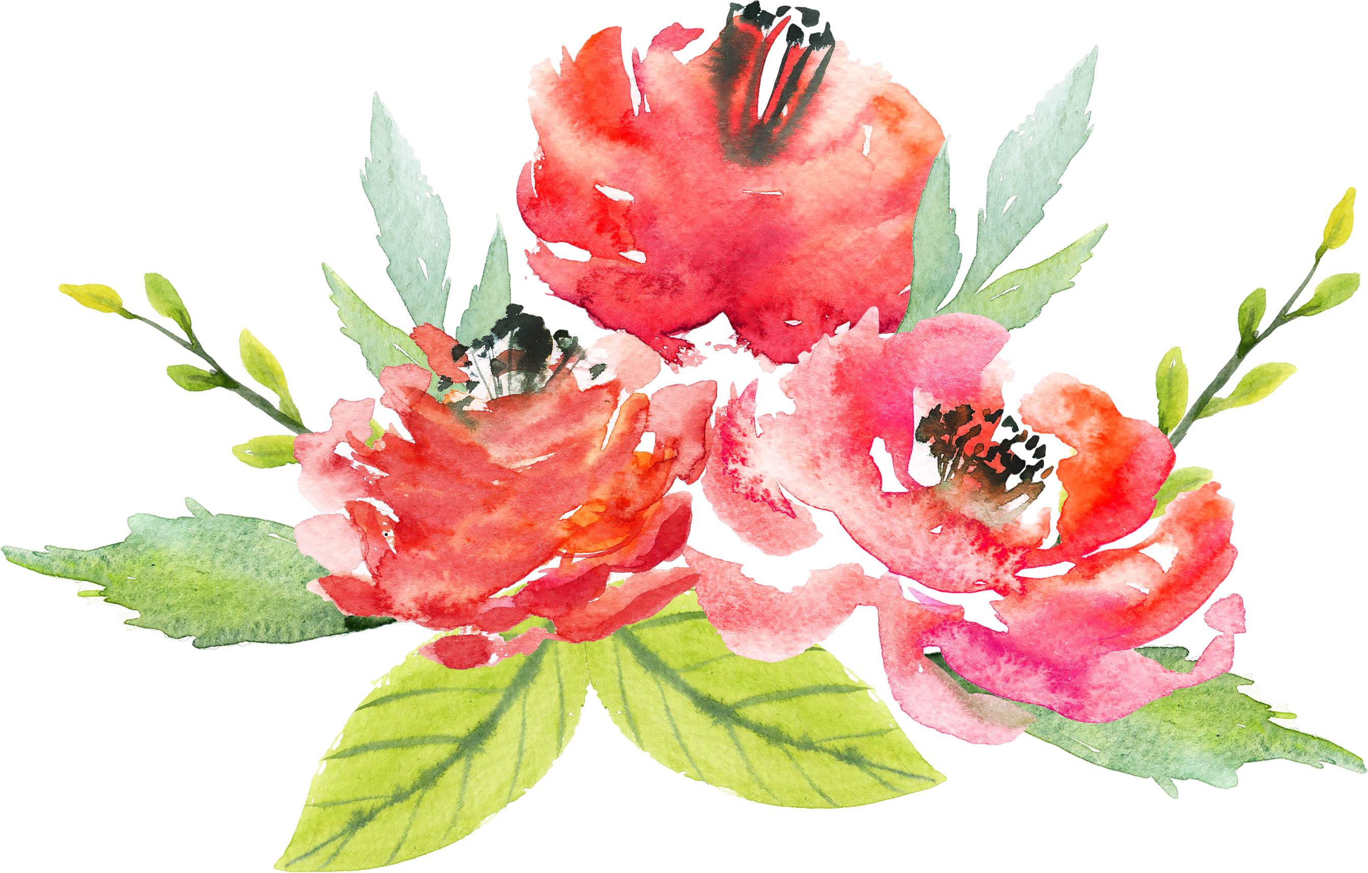 Floral design painting flowers. Flower watercolor png