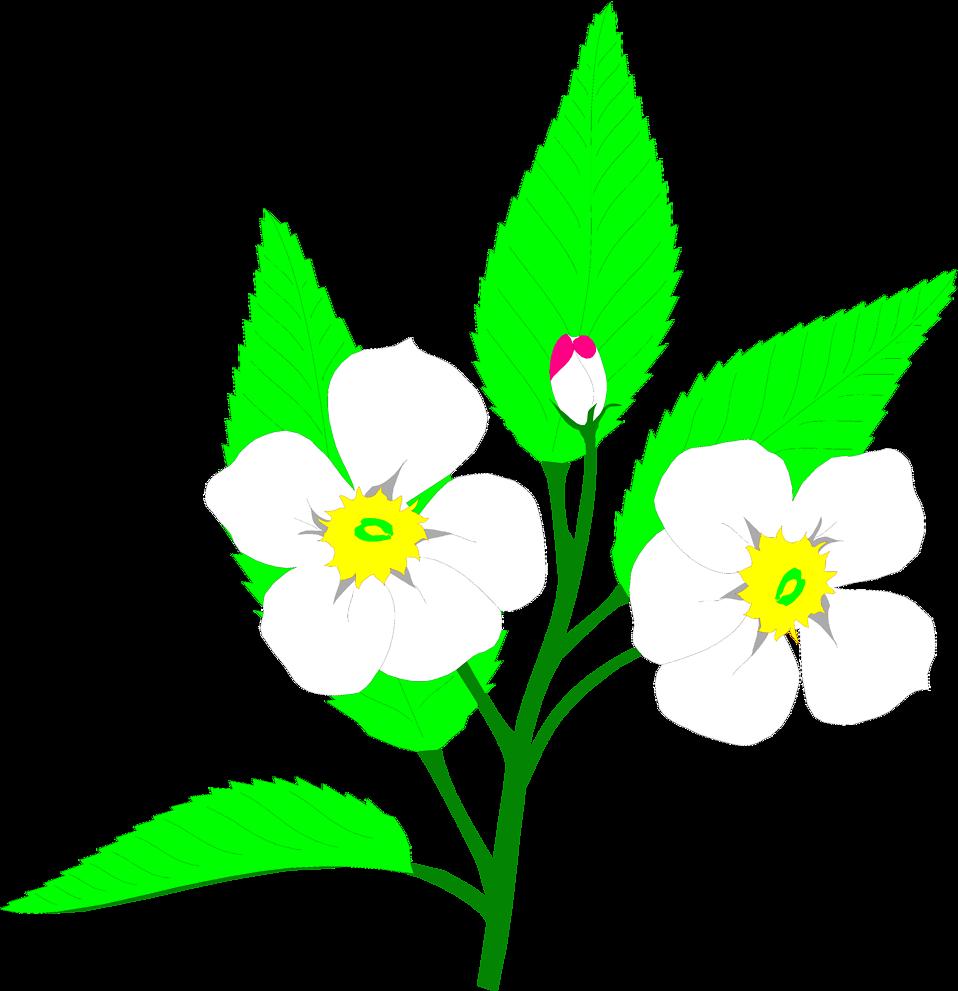 Flowers clipart apple blossom. Free stock photo illustration