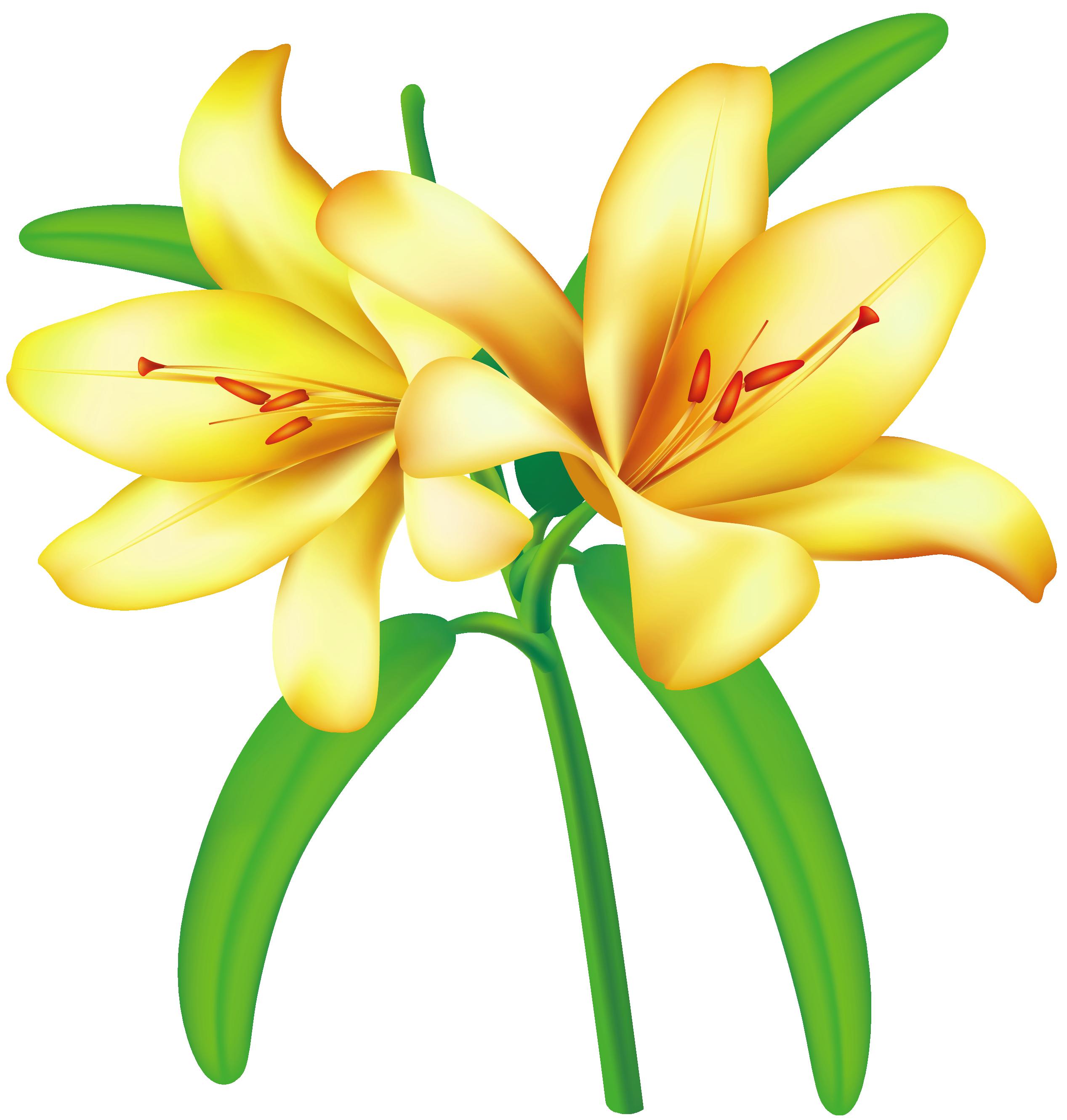 lily clipart yellow jessamine