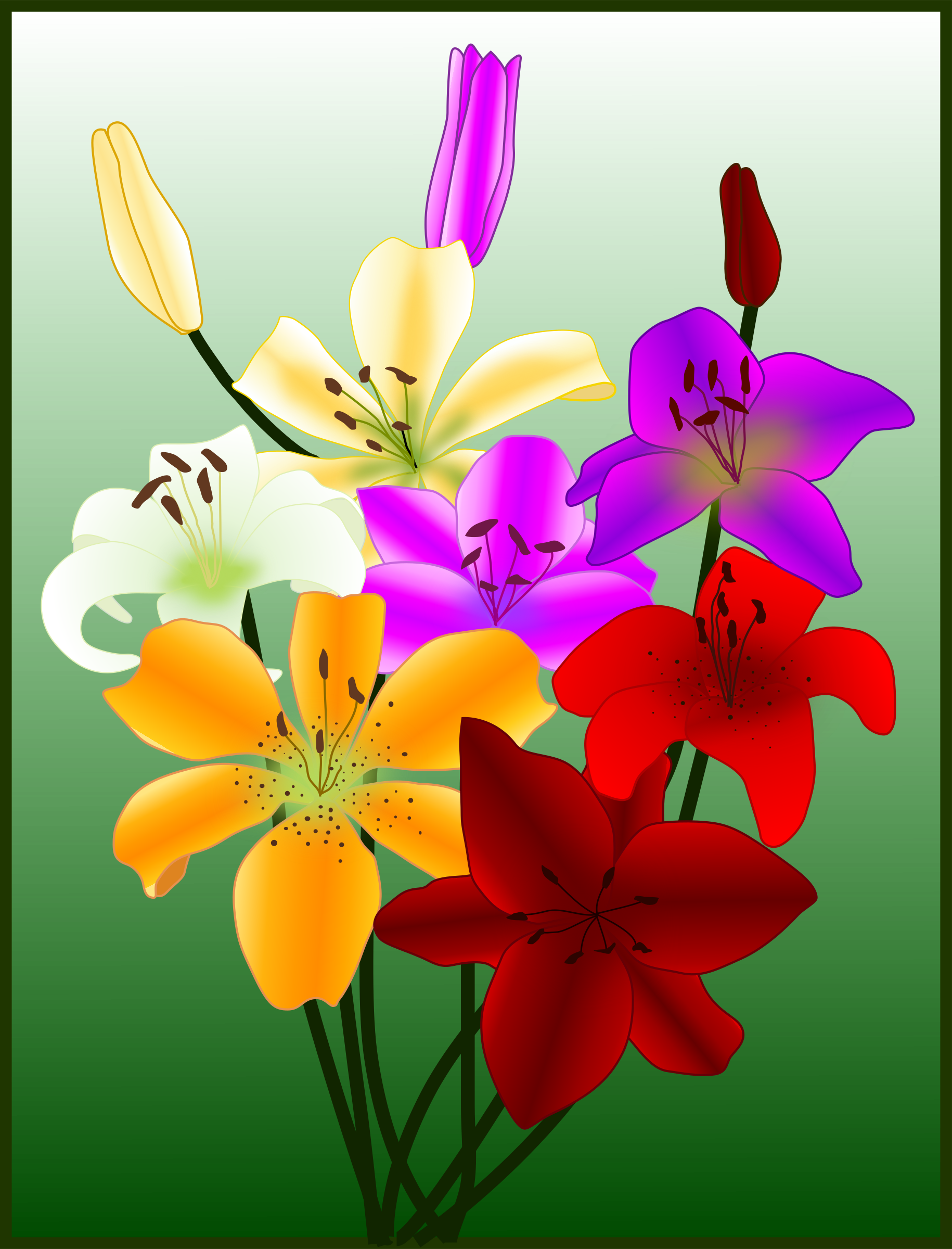 Gigli lilies big image. Flowers clipart card