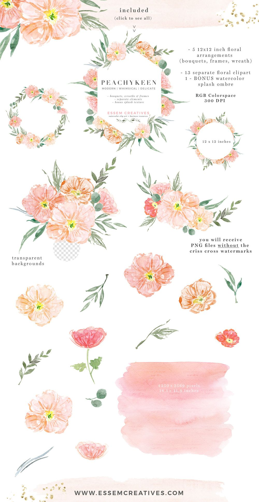 Blush pink watercolor poppies. Flowers clipart logo