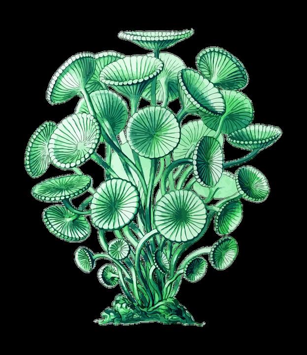 pixabay photo illustrations. Flowers clipart ocean