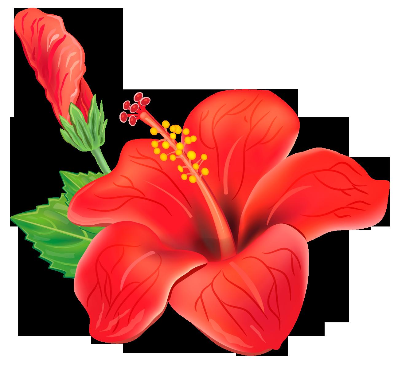 Hibiscus jaswand