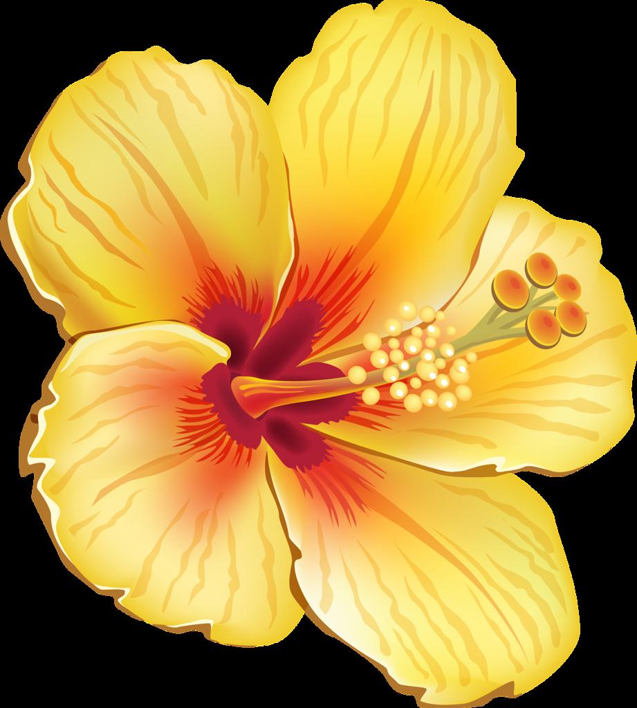 Tropical flower png. Clip art hawaiian flowers