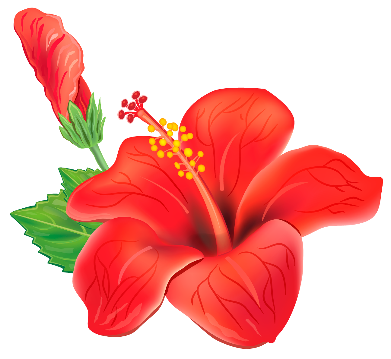 Red exotic clipart picture. Hawaii flower png