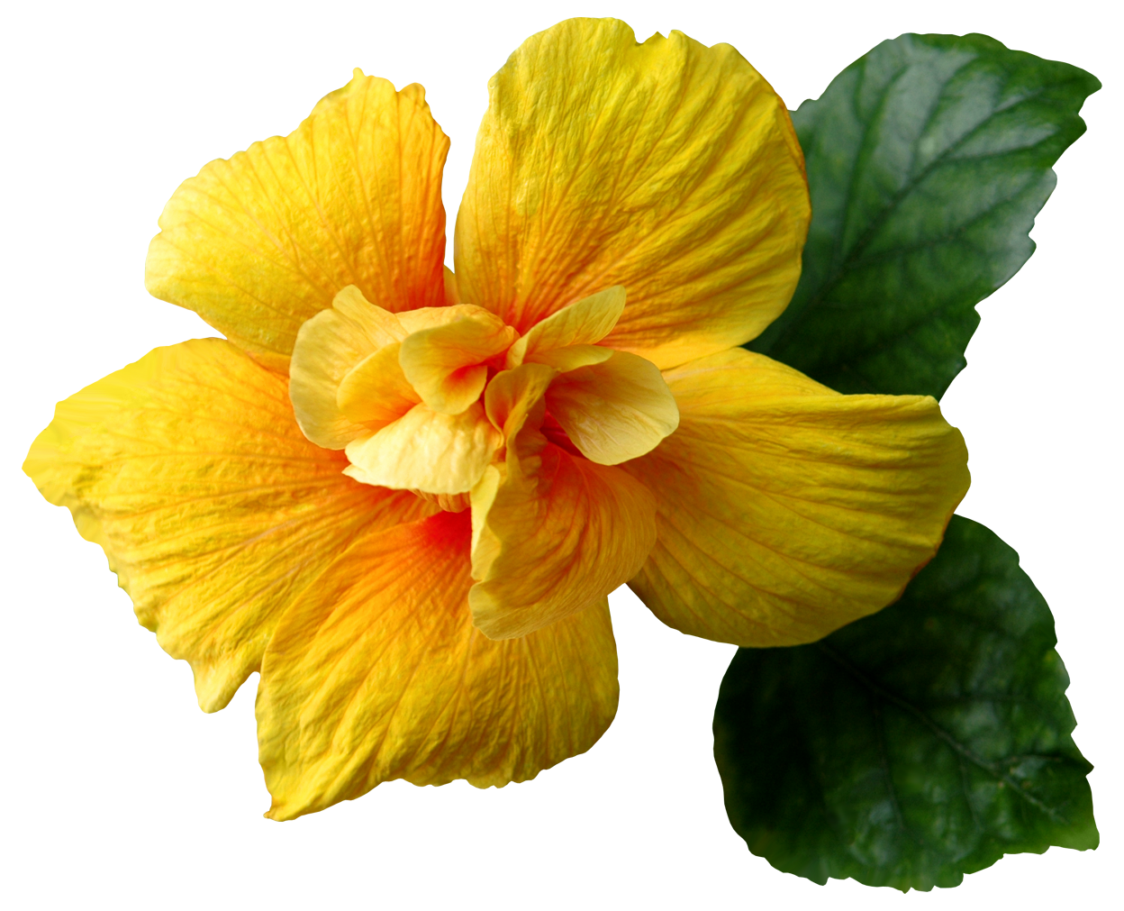 Clip art image gallery. Yellow flower png
