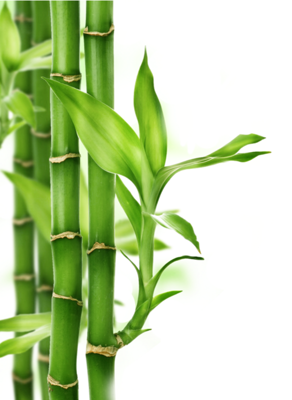 Flute clipart big bamboo. Pin by montse on