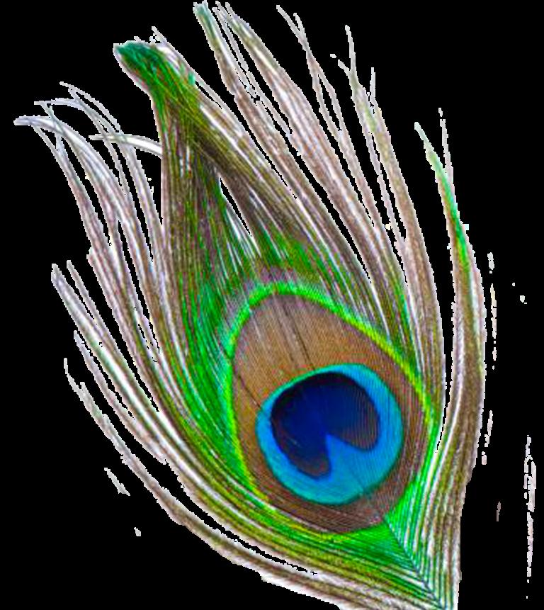 peacock clipart mayur pankh